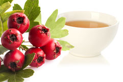 Herbal medicine: Hawthorn tea. Royalty Free Stock Images