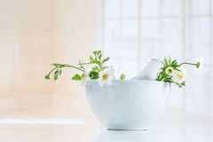 Herbal medicine healing herbs, mortar and pestle stock photography