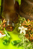 Herbal medicine and herbs Royalty Free Stock Images