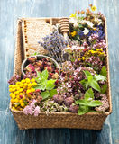 Herbal Medicine.  herbs, flowers and honeycomb. Royalty Free Stock Photography