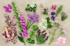 Herbal Medicine with Herbs and Flowers Royalty Free Stock Photography