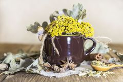 Herbal medicine, homeopathy, the collection of medicinal herbs for tea and medicines. Dried tansy flowers and oak leaves in a cup stock photos