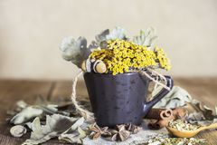 Herbal medicine, homeopathy, the collection of medicinal herbs for tea and medicines. Dried tansy flowers and oak leaves in a cup stock image