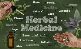 Herbal Medicine Illustration in Classic Style Vector Illustration