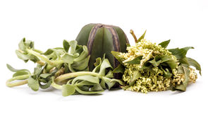 Herbal medicine. Isolated herbal medicine over white background Royalty Free Stock Images