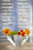 Herbal Medicine - nasturtium. herbal tea Royalty Free Stock Images