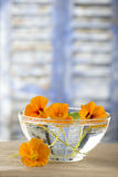 Herbal Medicine - nasturtium. herbal tea Stock Image