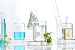 Herbal medicine natural organic and scientific glassware, Research and development concept.  royalty free stock photo