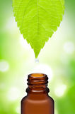Herbal medicine pharmacy. With green background Royalty Free Stock Photo