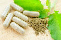 Herbal medicine powder and capsules with green organic herb leaves. Herbal medicine powder and capsules with green organic herb leaves on wooden background royalty free stock images