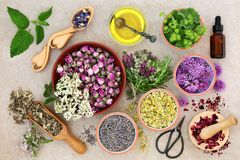 Herbal Medicine Preparation. With fresh herbs and flowers, aromatherapy essential oil, mortar with pestle and scissors on hemp paper background. Top view Stock Photography