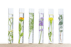 Herbal medicine researchPants in test tubes royalty free stock photo
