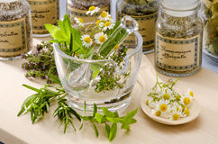 Herbal Medicine. Rosemary, mint, chamomile, thyme in a glass mortar. Blue background Stock Image