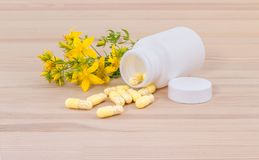 Herbal medicine with  St. John`s wort. Blooming and dried St. John`s wort and white container with medicines  on wooden ground Royalty Free Stock Photography