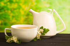 Herbal medicine, tea with  hawthorn flower Royalty Free Stock Images