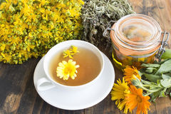 Herbal Medicine, Tea, St. John`s Wort, Savory, and Calendula Oil Stock Photo