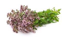 Herbal medicine:Thyme Stock Photo