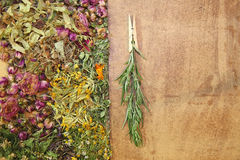 Herbal medicine, wormwood Royalty Free Stock Photos
