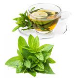 Herbal mint tea Royalty Free Stock Photo