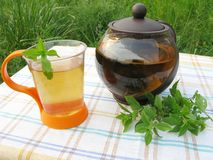 Herbal mint tea picnic in nature Royalty Free Stock Photo
