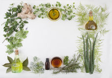 The Herbal natural background. The Herbal natural healthy background Stock Photography