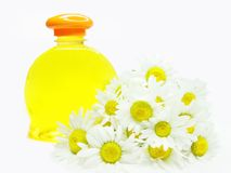 Herbal natural shampoo bottle among daisy flowers Stock Photography