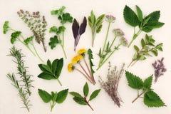 Herbal Nature Study Stock Photos