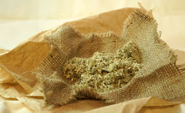 Herbal naturopathic medicine. Healing herbs over old paper background. Herbal naturopathic medicine Stock Images