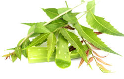 Herbal Neem leaves with aloevera Stock Image