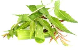 Herbal Neem leaves with aloevera stock image