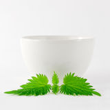 Herbal Nettle Tea Bowl. White porcelain bowl with fresh nettle leaf royalty free stock photo