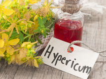 Herbal oil made of st john's wort Royalty Free Stock Images