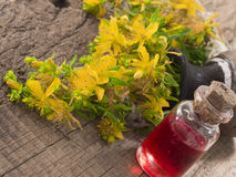 Herbal oil made of st john's wort Royalty Free Stock Photos