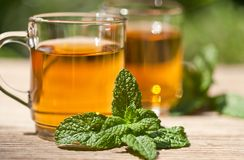 Herbal peppermint tea closeup macro outdoor summer Royalty Free Stock Photography