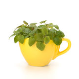 Herbal peppermint tea cup Stock Images