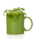 Herbal peppermint tea cup Stock Photo