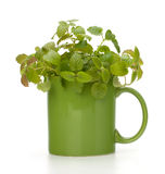 Herbal peppermint tea cup Stock Image