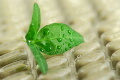 Herbal pills Stock Photography