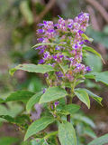 Herbal plant Stock Image