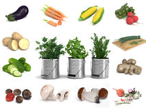 Herbal Plants in Cans Ringed by Veggies and Spices Stock Image