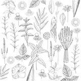 Herbal plants. Plants for natural cosmetics. Organic cosmetics b Stock Photo