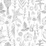 Herbal plants. Plants for natural cosmetics. Organic cosmetics b Stock Photos
