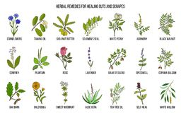 Herbal remedies for healing cuts and scrapes. Hand drawn set of medicinal herbs vector illustration