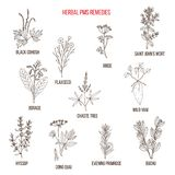 Herbal Remedies for PMS Royalty Free Stock Photos