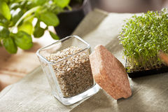 Herbal Salt Stock Images