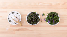 Herbal salt and ground ivy Stock Photo