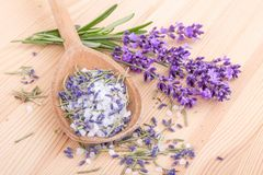 Herbal salt with rosemary and lavender. Wooden spoon with Herb salt of rosemary and lavender blossoms Royalty Free Stock Image