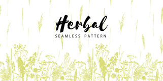 Herbal seamless pattern. Botanical border. Vector grass background. Design element for green, organic, eco, herbal medicine and other uses stock illustration