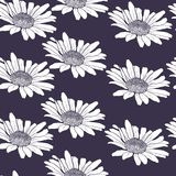 Herbal seamless pattern with chamomiles Royalty Free Stock Images