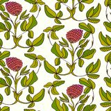 Herbal seamless pattern with clovers Royalty Free Stock Images